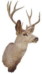 DeerOther2