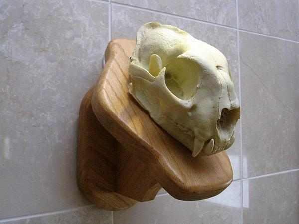マウンテン ライオン 精密複製!頭骨模型