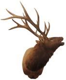 DeerOther1