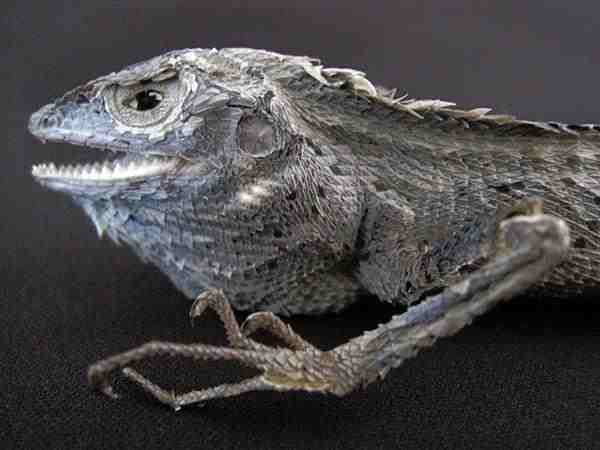トカゲ 標本 剥製