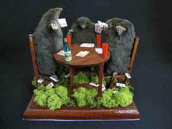 トランプカードで遊ぶ 野生モグラ 3体 剥製